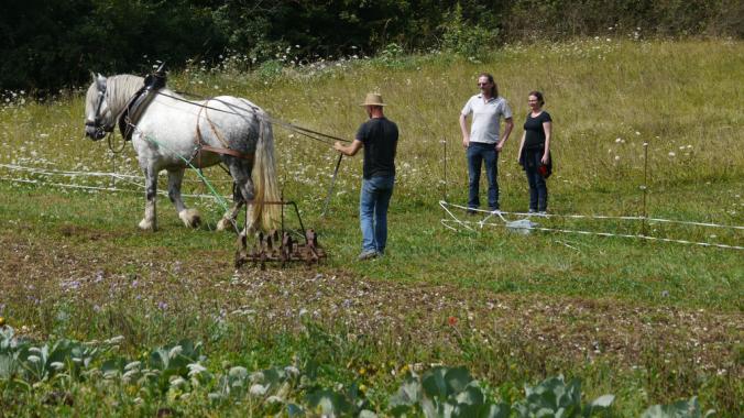 démonstration travail du sol en traction animale_resultat